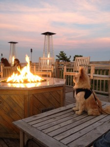 Pet Friendly Bar Harbor