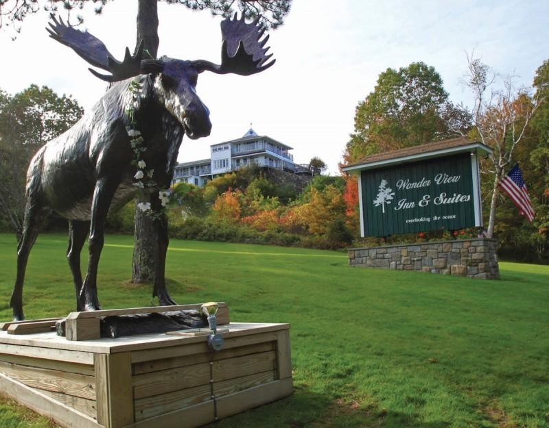 Moose at Wonder View Inn in Bar Harbor