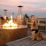 Pet-Friendly Bar Harbor
