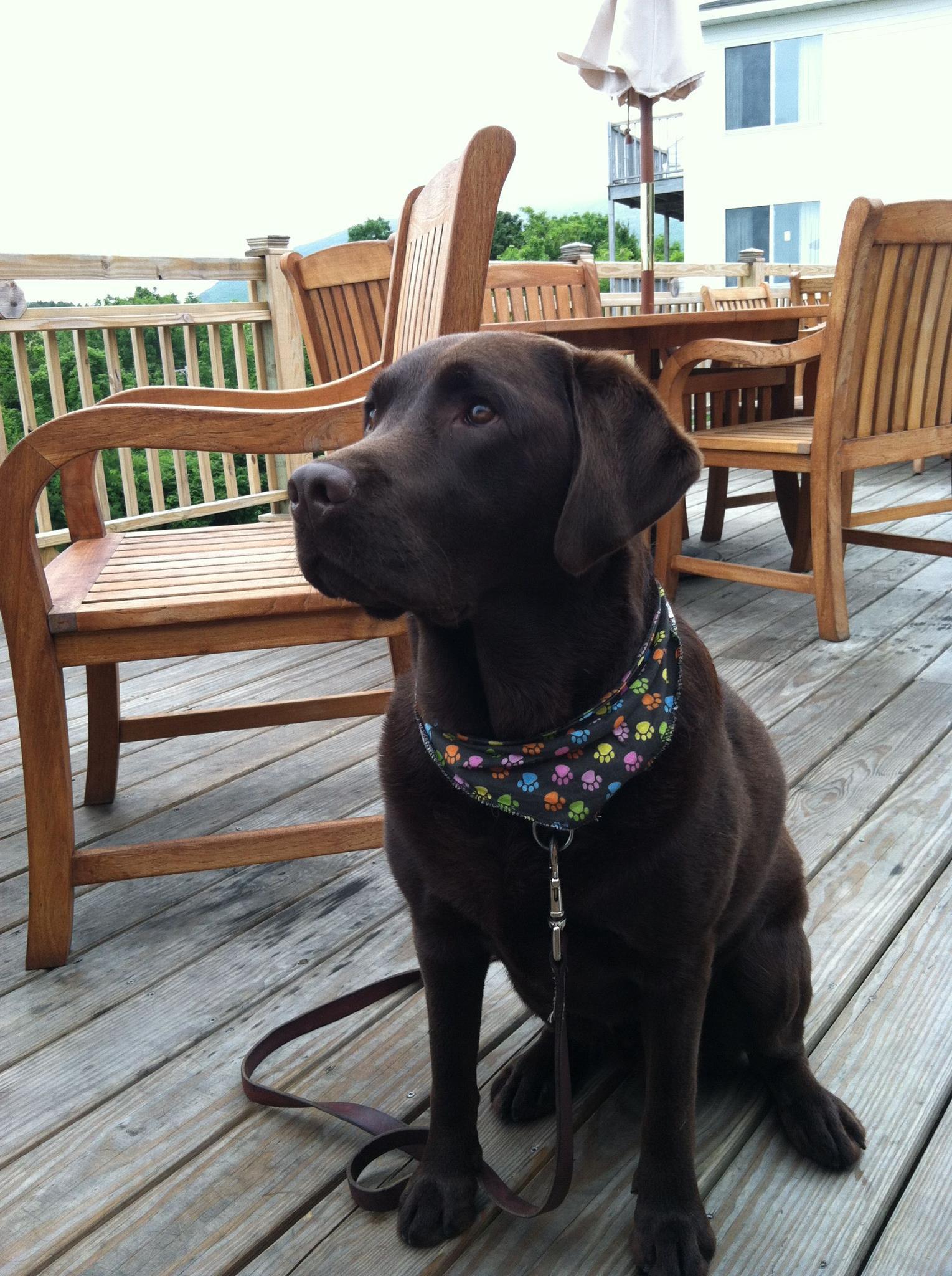 We Are A Bar Harbor Maine Pet Friendly Inn